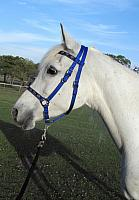 Traditional Halter Bridles