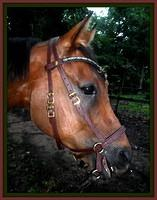 Easter's Custom Bitless Bridle and Browband